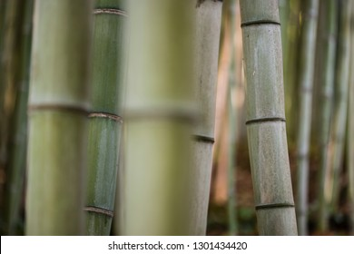 Detail of bamboo stems in the shadow.