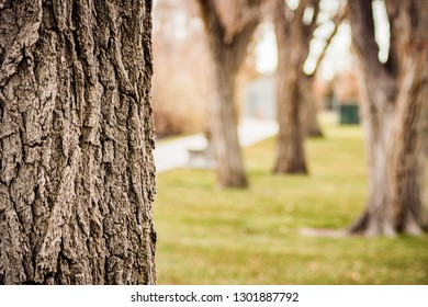 Detail of the bark on a tree, against a blurry background of more trees and a park bench.