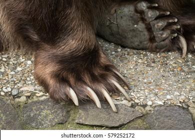 Black Cat Claws