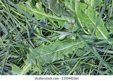 Detail of the bedew stalks and leaves of grass