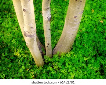 Detail of birch tree and ground leaves together white and green