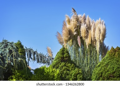 Detail of blooming plants in a beautiful sunny spring day