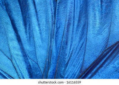 Detail of blue butterfly wing