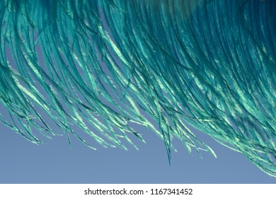 Detail of blue ostrich feathers against a blue sky