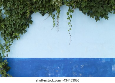 A Detail from a Blue Wall Covered with Green Leaves