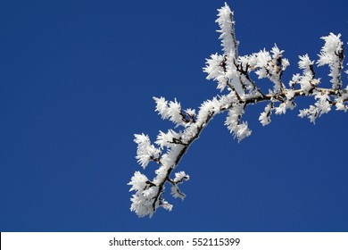 Detail of a branch covered with hoarfrost with blue sky in the background