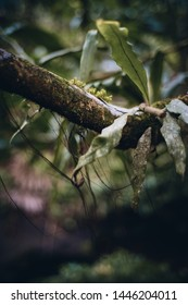 Detail of branch in tropical forest