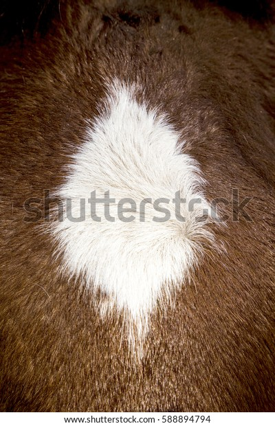 detail of brown horse mane in sun