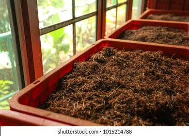 Detail of bulk ceylon tea (orange pekoe leaves being dried) in plastic boxes, with green scenery behind windows. Kadugannawa Tea Factory, Kandy, Sri Lanka