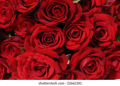 Detail of bunch of red roses