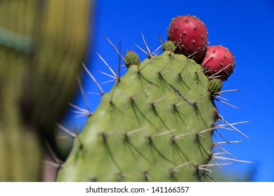 Detail of cactus in botanical garden in Monaco.