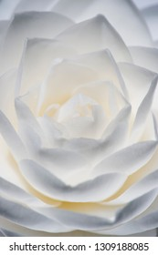 Detail of Camelia flower with white, grey and yellow petals.