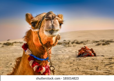 Detail of camel's head in the desert with funny expression