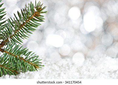 Detail of Christmas twig on the snow