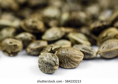 Detail closeup view of medical marihuana seeds