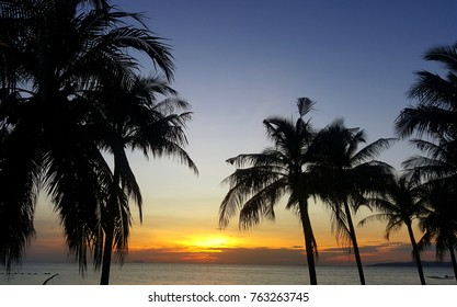 Detail of coconut trees with soft light sunset background on the beach