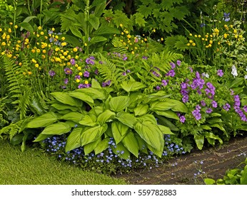 Detail of a colourful flower border with a Hosta as centre piece in a cottage garden