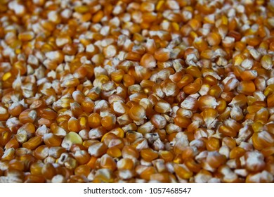 Detail of Corn on a market, raw Side, Meal