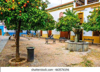 detail of a courtyard with an orange garden situated in the spanish city sevilla