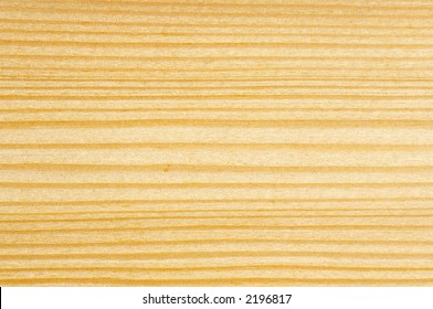 Detail of cut tree - spruce