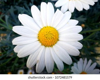 Detail of a daisy