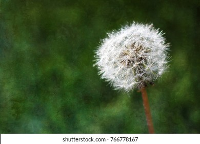 Detail of Dew Covered Dandelion on Green Texture Background