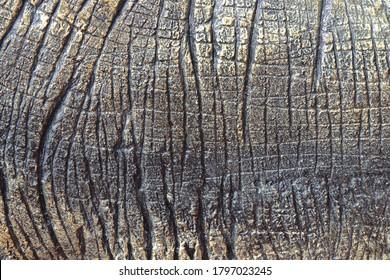 Detail of dinosaur thick animal skin texture