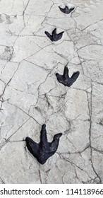 Detail of dinosaur tracks in Spain