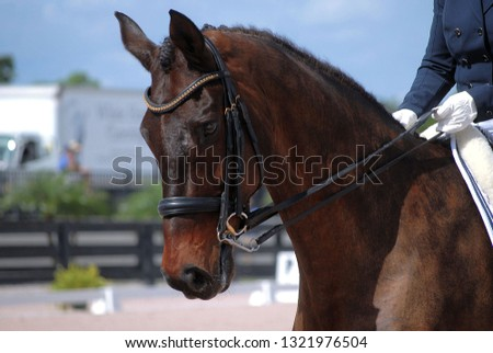 Detail of dressage horse and rider competing. The horse is brown with a leather bridle.The riders hands are visible. It is a sunny day.