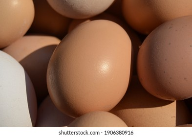 Detail egg of chicken. Take care of nature.