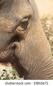 detail of elephant