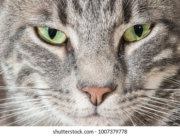 detail of the Eyes of a cat