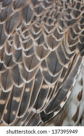 detail feathers of a predator