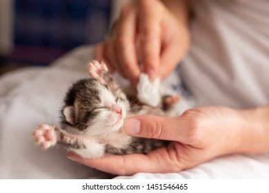 Detail of female hands massaging orphan kittens belly to stimulate its bowel movements as a simulation of mother cat's licking in order to stimulate urination and defecation