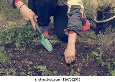 Detail of female hands pulling out weeds from garden.