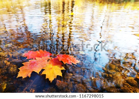 Detail of a few leaves on the water surface