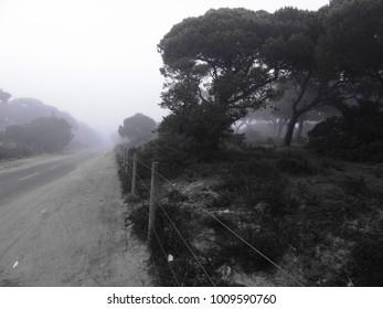"Detail of Fog in a Portuguese Forest in ""Mata dos Medos"", Aroeira, Almada near Lisbon, Portugal"