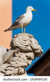 Detail of the Fountain of Neptune with seagull in Piazza Navona in Rome