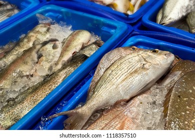 Detail of fresh fish in the fish market.