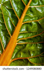 A detail of a fresh leaf of the chard (Swiss chard)