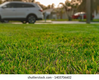 Detail of front lawn focus on fresh cut grass.