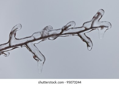 detail with a frozen branch with ice