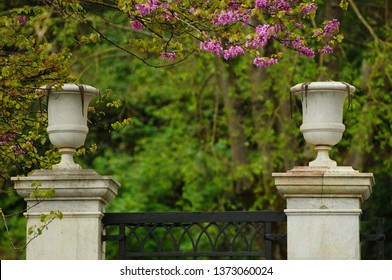 detail of a gate with flowering plants in spring