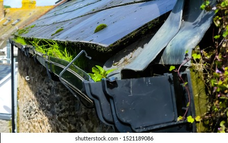 Detail of grass and weeds growing outside in a plastic gutter beneath grey slate roof. Moss growths and ivy complete the image of disrepair. England.