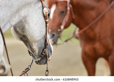 Detail of a gray quarter horse at show, ready to compete