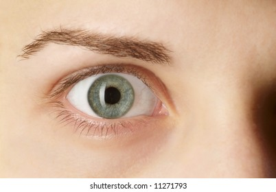 detail of a green eye with brow