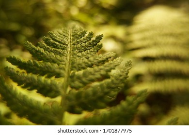 Detail of green fern leaves in forest