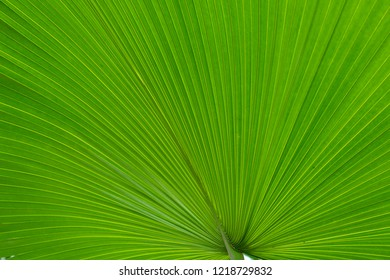 detail of green harmonic palm leaf structure