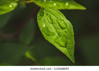 Detail of a green leaf with drops of water.