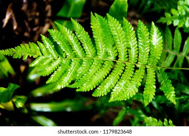 Detail of green leaves fern.